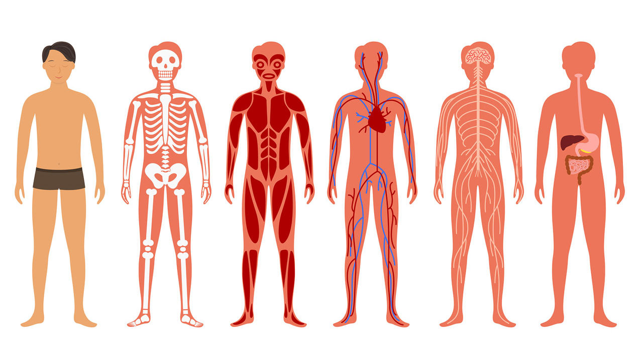 Bodytomy